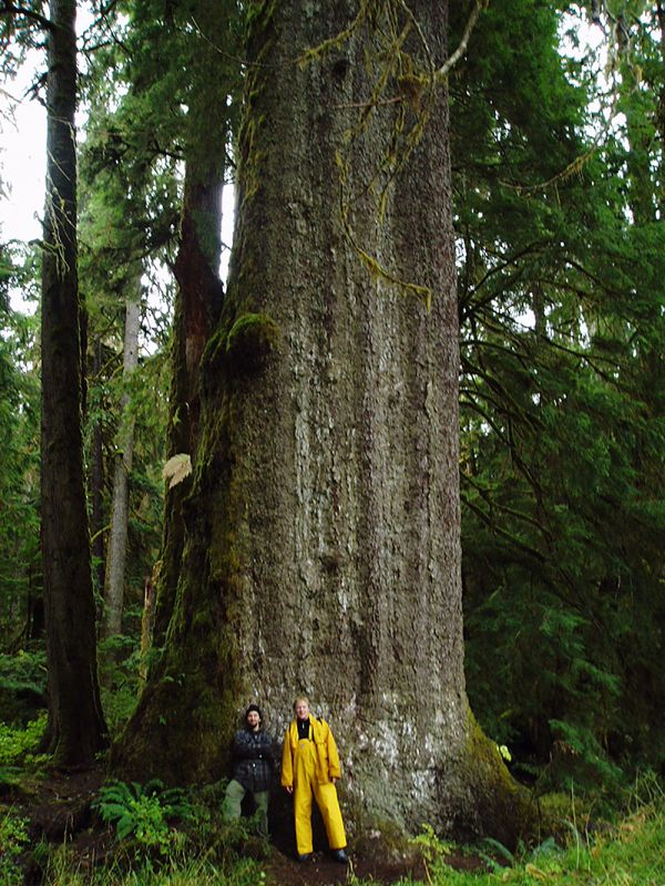 Haida  Gwaii Natural Resource District-5.jpg