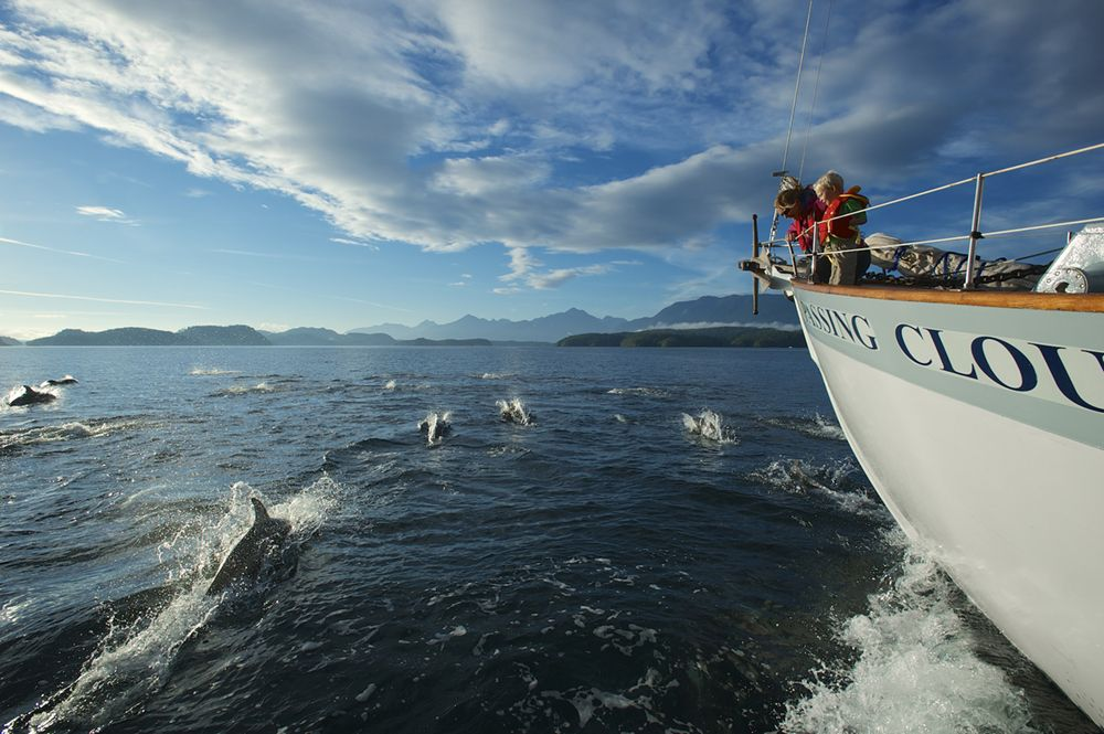 Outer Shores Expeditions-dolphins on bow.jpg