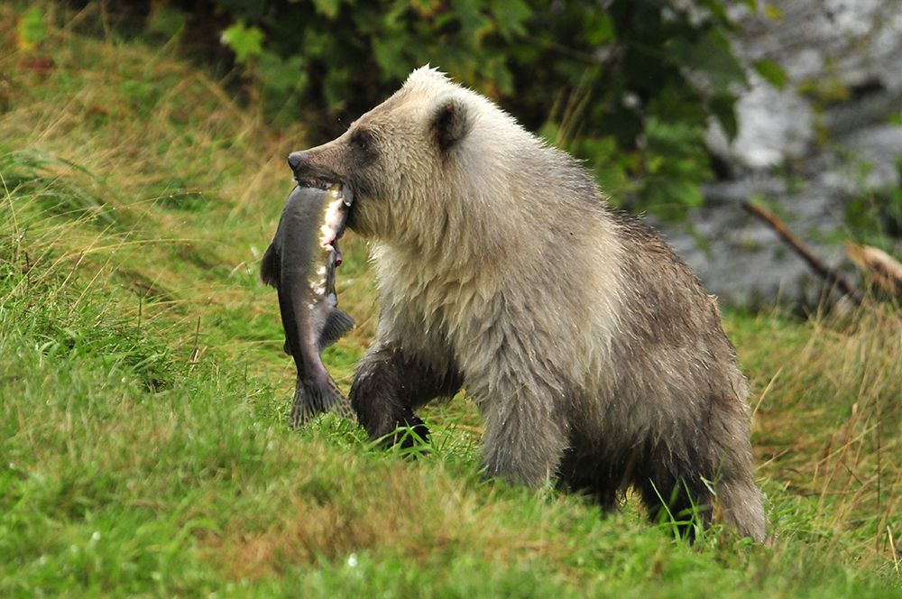 No, I am not sharing, Knight Inlet Lodge, credit Robert Scriba