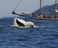 On an adventure tour charter near Haida Gwaii, photo courtesy Kevin J. Smith/Maple Leaf Adventures