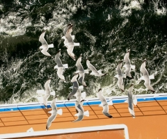 Seagulls in Flight - credit Julie Collis