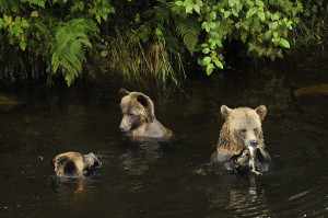 Why the three bears didn't eat their porridge, credit Robert Scriba