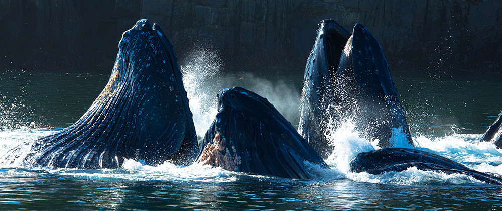 whale of a time, credit Tourism Prince Rupert