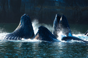 We hate to say goodbye, credit Tourism Prince Rupert