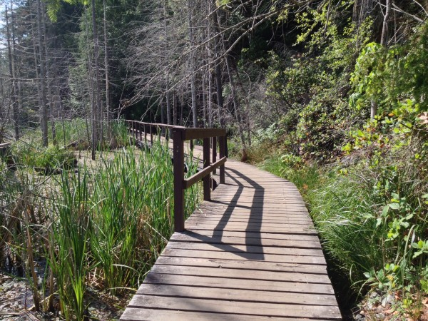 Boardwalk - Wetland Marsh Area