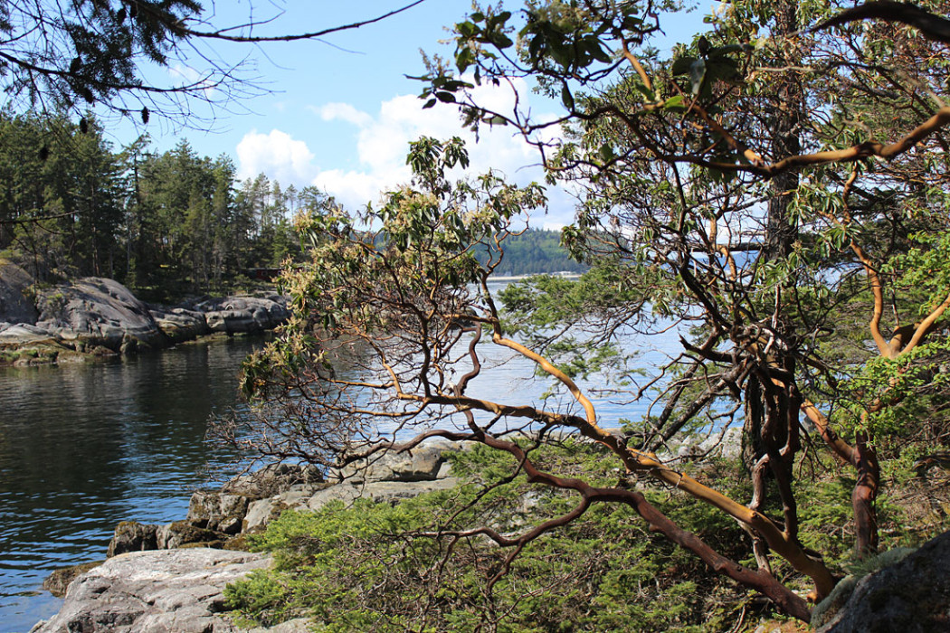 Smuggler Cove Provincial Marine Park – The Arbutus Tree