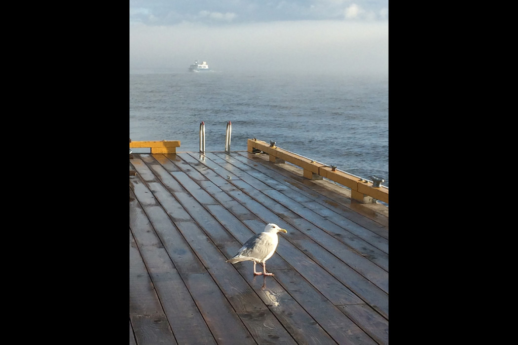 Seagull and boat in the fog at Painters British Columbia coast