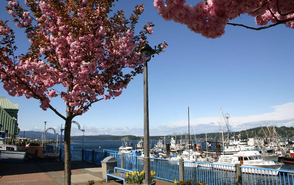 Campbell River Government Wharf